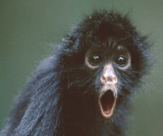 mono-arana-alucinando
